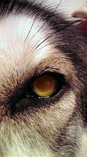 ウチのお犬様♪-picture.jpg
