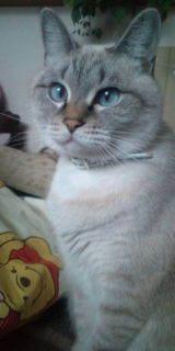 ウサ猫とポチャ猫-20111211145925.jpg