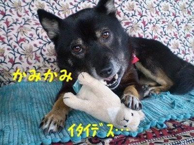 まるちゃんのしっぽ-4