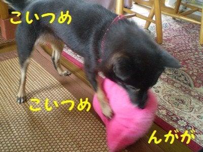 まるちゃんのしっぽ-3