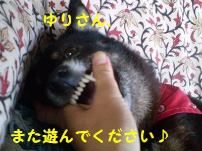まるちゃんのしっぽ-10