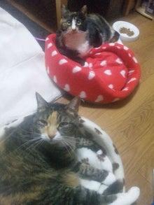 $溺愛猫のツレヅレ猫日記-111212_1940331.jpg