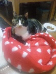 $溺愛猫のツレヅレ猫日記-111212_1940471.jpg