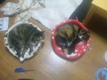 $溺愛猫のツレヅレ猫日記-111212_2113521.jpg