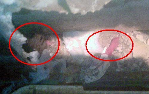 害虫・害獣から街を守るPCOの調査日記-ネズミの赤ちゃんと親