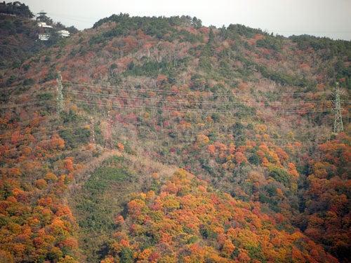 害虫・害獣から街を守るPCOの調査日記-六甲山