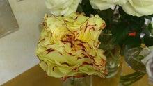 診療室のバラ-DSC_0087.JPG