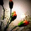 花をみて思うこと