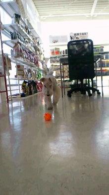 DOGPLEX店長のBLOG-2011121710590000.jpg