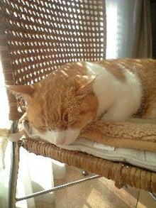 ずれずれブログ…湘南で猫と暮らせば…-111219_1043~0001.jpg