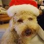 メリー♪クリスマス!…