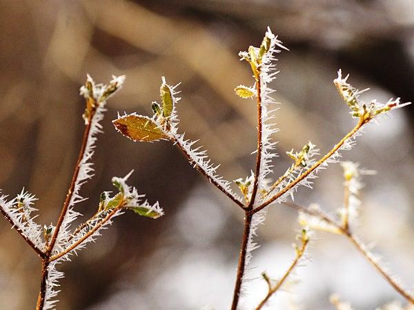神戸・六甲山ホテルスタッフの「四季折々」-111225枝に霜