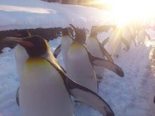 $ちちん家 -ラクロス--ペンギン