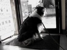 KUTSUSANのオフィシャルブログ-111225_01