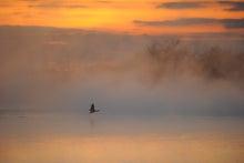 $鳥景写真家-タクミの野鳥ブログ-鳥景写真 カワウ
