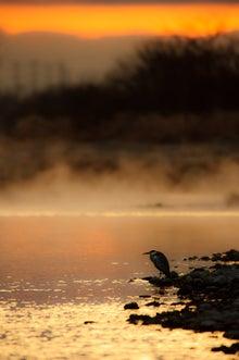 鳥景写真家-タクミの野鳥ブログ-鳥景写真 アオサギ