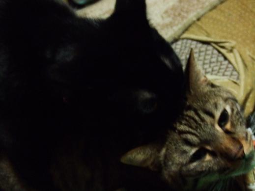 ネコに真珠・豚にゴハン-マウンテ~ん
