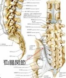 カイロプラクターが教える。腰痛・肩コリ・寝違えの原因・対処法・予防法。