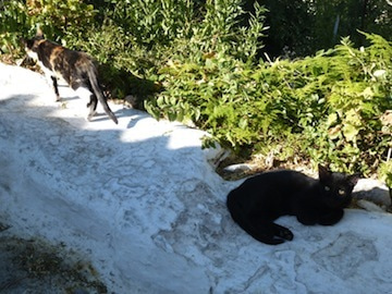 ギリシャ猫5