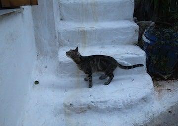 ギリシャ猫2