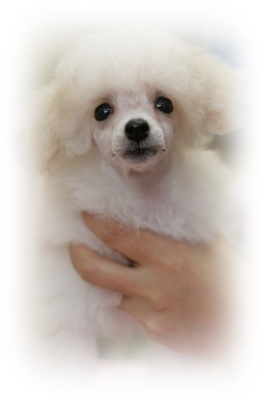 $Dog Salon Fairy Ann