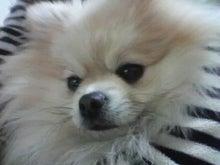 クレイの癒しとパワーを勉強中☆mayumi-2011122915120000.jpg