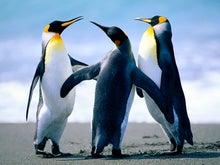 ☆rinon☆-ペンギン
