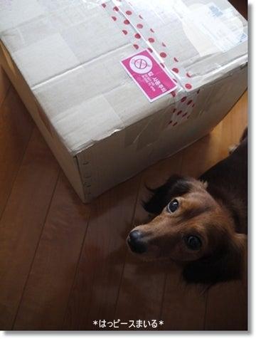 はっピースまいる-韓国から届きました