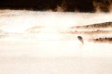 $鳥景写真家-タクミの野鳥ブログ-鳥景写真-黄金の川