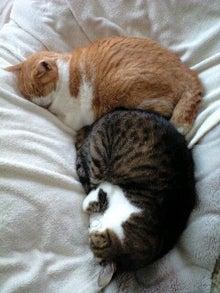 ずれずれブログ…湘南で猫と暮らせば…-110517_1423~0001.jpg