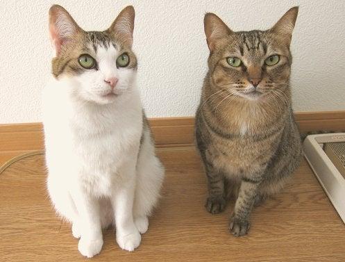 あるがまま ~彼女とネコと同居中~