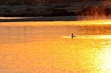 鳥景写真-輝く川面