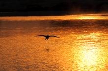 鳥景写真-舞い降りる