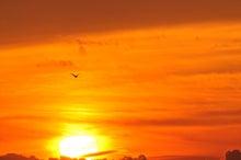 鳥景写真-2012初日の出