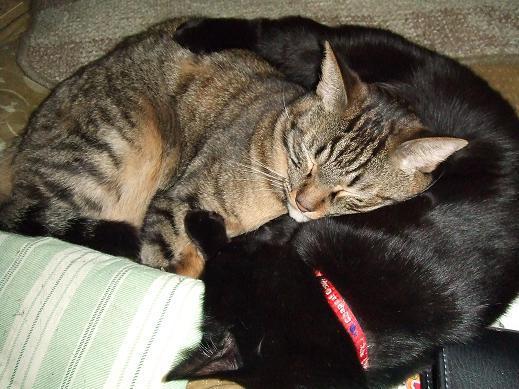 ネコに真珠・豚にゴハン-みたらし&あんこ