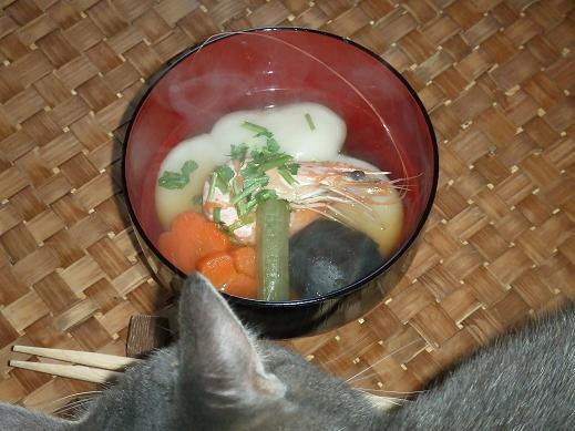 ネコに真珠・豚にゴハン-えび~♪