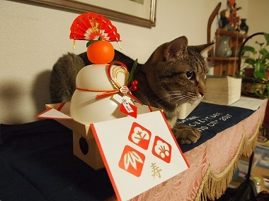 にゃんこらぼ。 ~猫とペット食育指導士の美味しい毎日~