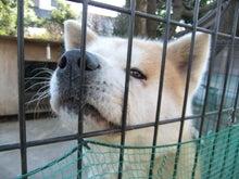もしゃの動物園-秋田くん1