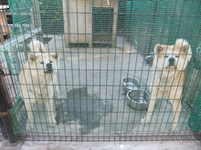 もしゃの動物園-秋田くん3
