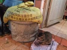 もしゃの動物館-市場の猫