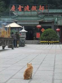 もしゃの動物館-寺の猫1