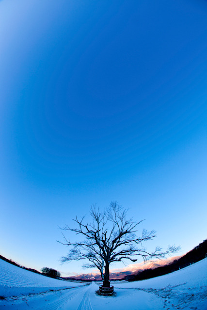 Life with camera-あの樹に逢いに