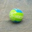 春の高校バレーボール…