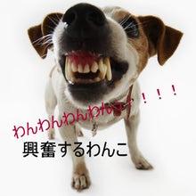 $犬のホリスティックケア*makana*横浜湘南(ドッグマッサージ・レイキ・フラワーレメディー)