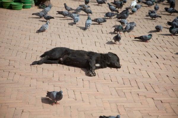 ベンガル猫のひめちゃん-犬5