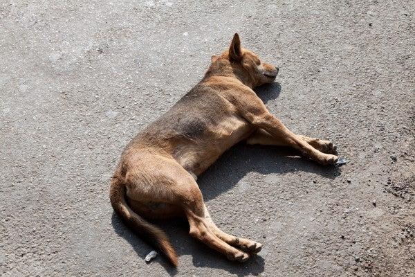 ベンガル猫のひめちゃん-犬1