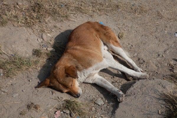 ベンガル猫のひめちゃん-犬2