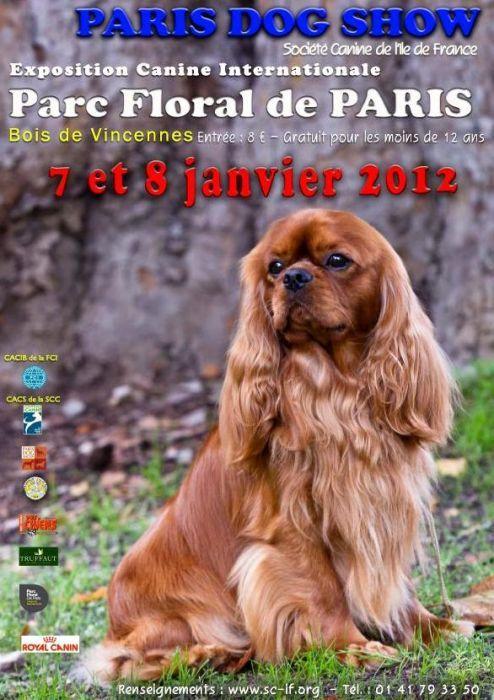 Mon petit parisien Merci est a Paris...