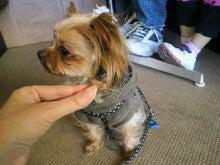 北斗の犬-2012010915430000.jpg