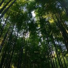 CAFE de MOUNT :: カフェでくつろぐ日本マウントWebスタッフのつぶやき-報国寺の竹林